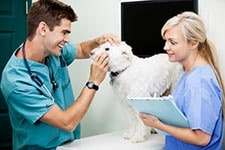 Veterinarian examination